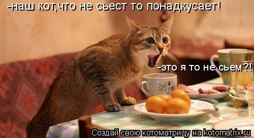 Котоматрица: -наш кот,что не сьест то понадкусает! -это я то не сьем?!