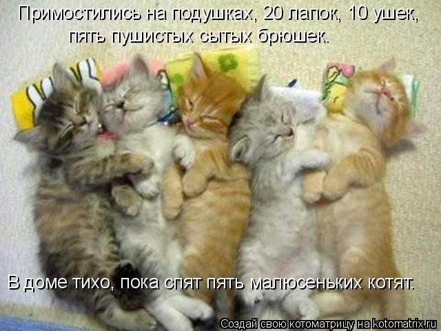 Котоматрица: Примостились на подушках, 20 лапок, 10 ушек, пять пушистых сытых брюшек. В доме тихо, пока спят пять малюсеньких котят.