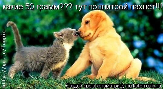 Котоматрица: какие 50 грамм??? тут поллитрой пахнет!!!