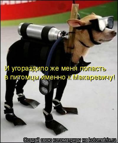 Котоматрица: И угораздило же меня попасть  в питомцы именно к Макаревичу!