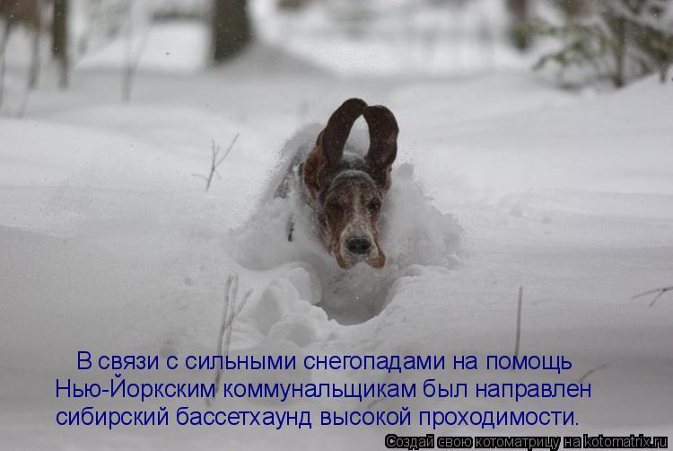 Котоматрица: В связи с сильными снегопадами на помощь  Нью-Йоркским коммунальщикам был направлен  сибирский бассетхаунд высокой проходимости.