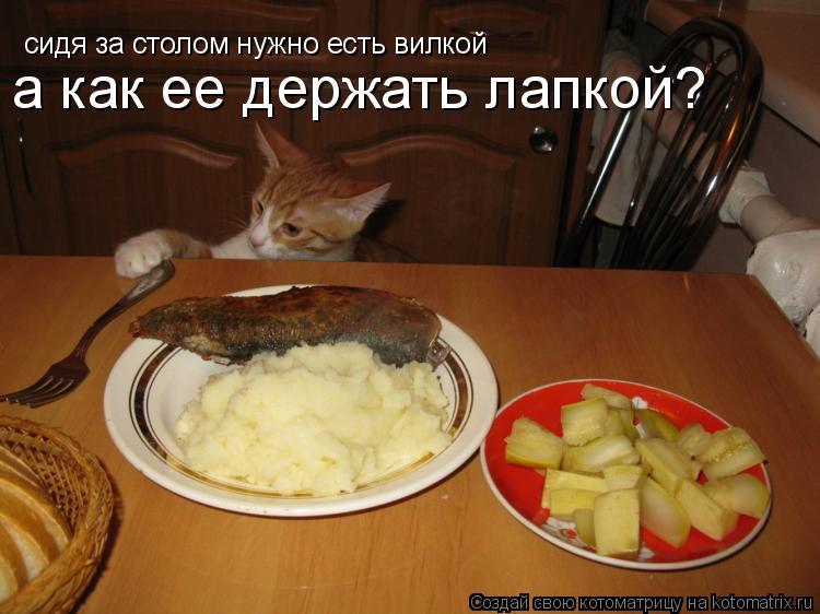 Котоматрица: сидя за столом нужно есть вилкой а как ее держать лапкой?
