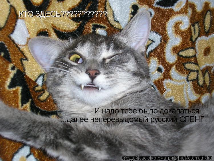 Котоматрица: КТО ЗДЕСЬ??????????? И надо тебе было докапаться ......далее неперевыдомый русский СЛЕНГ