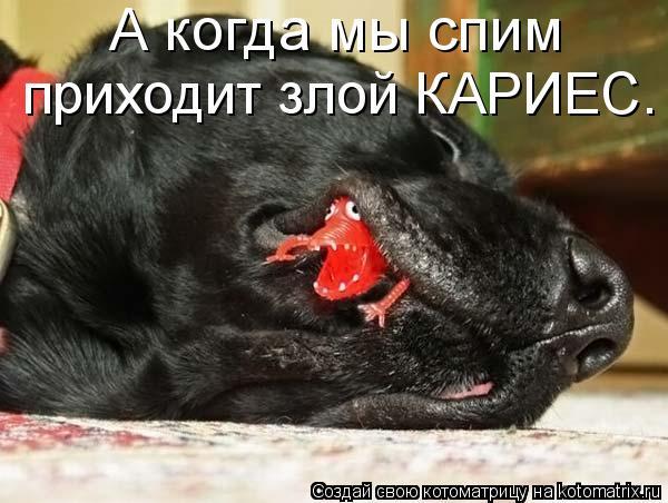 Котоматрица: А когда мы спим приходит злой КАРИЕС.