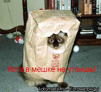 Котоматрица: Кота в мешке не утаишь!