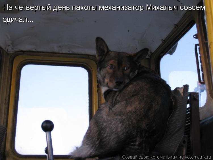 Котоматрица: На четвертый день пахоты механизатор Михалыч совсем одичал...