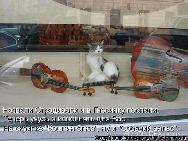 """Котоматрица: Назвали Страдивари и в Гнесинку послали.  Теперь учусь я исполнять для Вас  На скрипке """"Кошкин блюз"""", ну и """"Собачий вальс""""."""