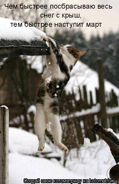 Котоматрица: Чем быстрее посбрасываю весь снег с крыш,  тем быстрее наступит март