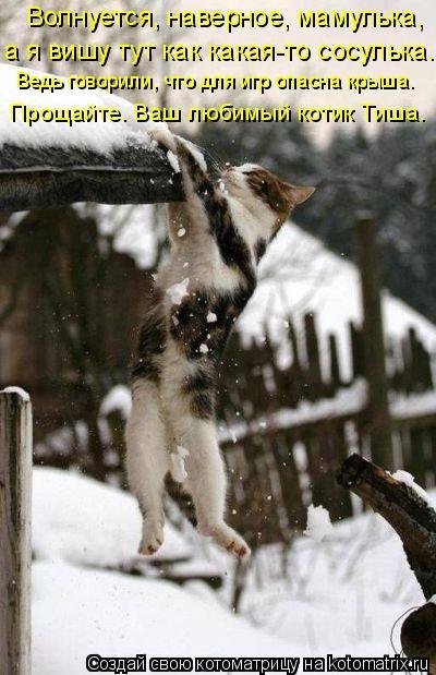 Котоматрица: Волнуется, наверное, мамулька, а я вишу тут как какая-то сосулька. Ведь говорили, что для игр опасна крыша. Прощайте. Ваш любимый котик Тиша.