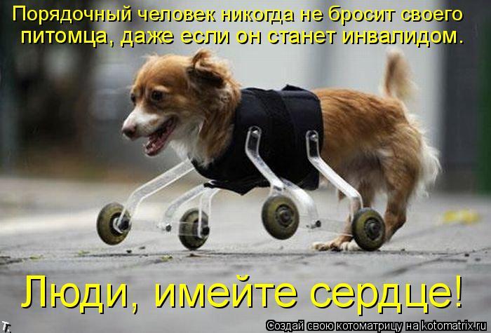 Котоматрица: Порядочный человек никогда не бросит своего питомца, даже если он станет инвалидом. Люди, имейте сердце!