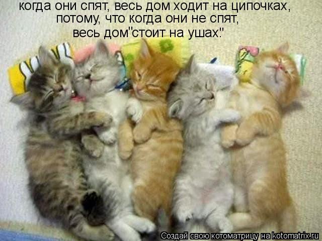 """Котоматрица: когда они спят, весь дом ходит на ципочках, потому, что когда они не спят, весь дом стоит на ушах. """" """""""