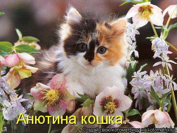 Котоматрица: Анютина кошка.