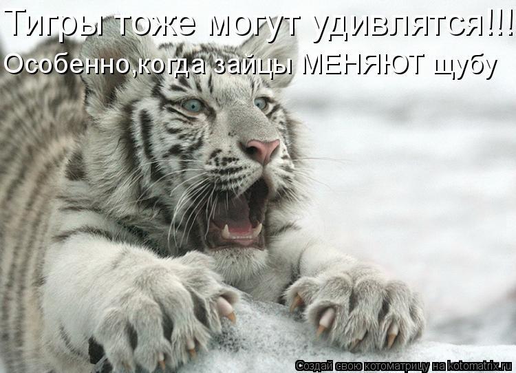 Котоматрица: Тигры тоже могут удивлятся!!!!! Особенно,когда зайцы МЕНЯЮТ щубу