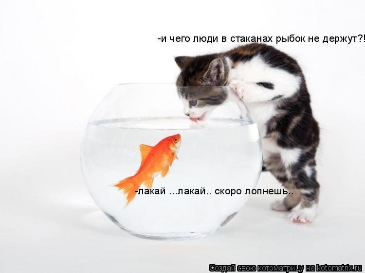 Котоматрица: -лакай ...лакай.. скоро лопнешь.. -и чего люди в стаканах рыбок не держут?!
