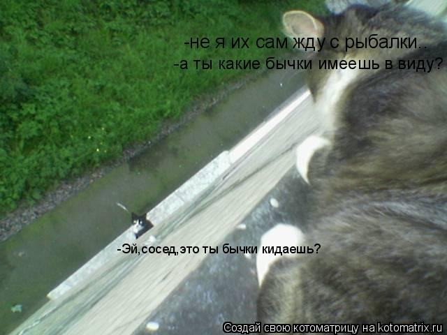 Котоматрица: -Эй,сосед,это ты бычки кидаешь? -не я их сам жду с рыбалки.. -а ты какие бычки имеешь в виду?