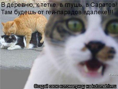 Котоматрица: В деревню, к тетке, в глушь, в Саратов! Там будешь от гей-парадов вдалеке!!!