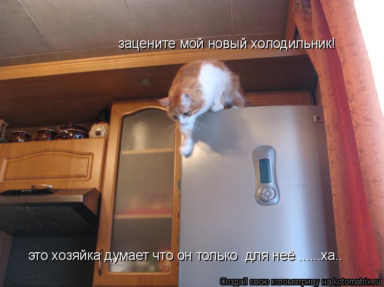 Котоматрица: зацените мой новый холодильник! это хозяйка думает что он только  для неё ......ха..