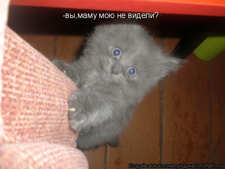 Котоматрица: -вы,маму мою не видели?