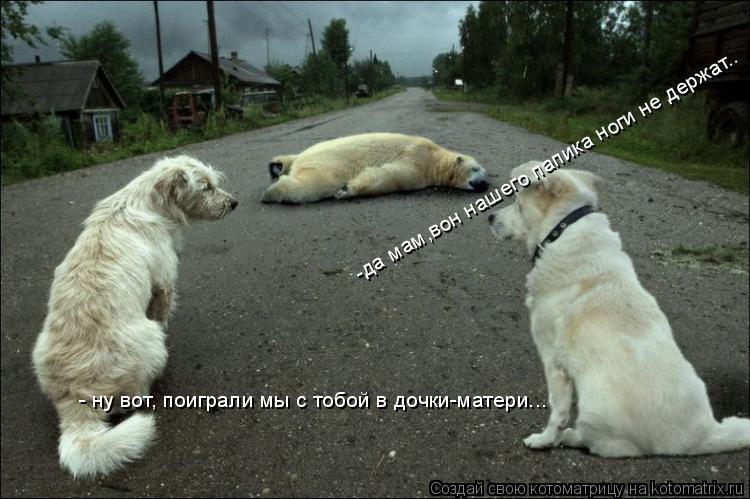 Котоматрица: - ну вот, поиграли мы с тобой в дочки-матери... -да мам,вон нашего папика ноги не держат..