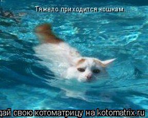 Котоматрица: Тяжело приxодится кошкам...