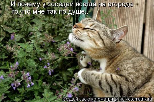 Котоматрица: И почему у соседей всегда на огороде то что мне так по душе..