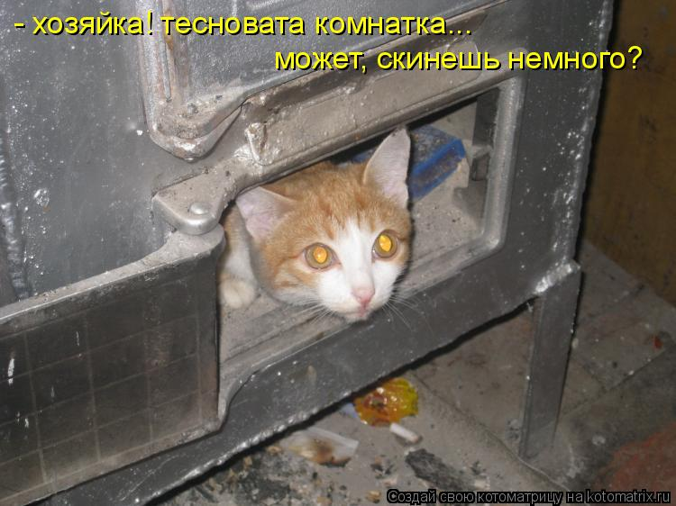 Котоматрица: - хозяйка! тесновата комнатка... может, скинешь немного?