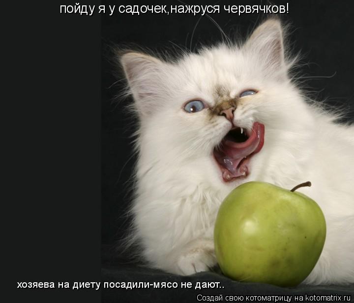 Котоматрица: пойду я у садочек,нажруся червячков! хозяева на диету посадили-мясо не дают..
