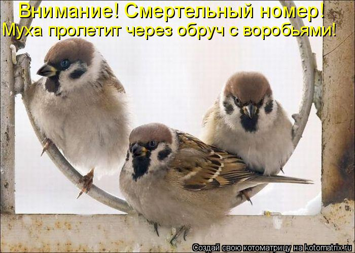 http://kotomatrix.ru/images/lolz/2010/03/04/504203.jpg