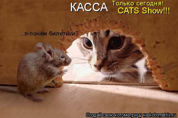 Котоматрица: КАССА Только сегодня! CATS Show!!! ...п-почём билетики?
