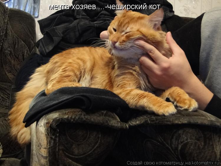 Котоматрица: мечта хозяев....-чеширский кот