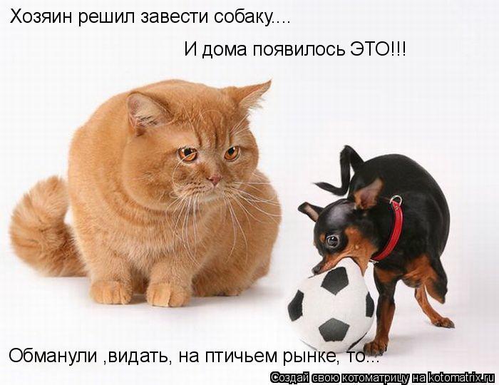 Котоматрица: Хозяин решил завести собаку.... И дома появилось ЭТО!!! Обманули ,видать, на птичьем рынке, то...