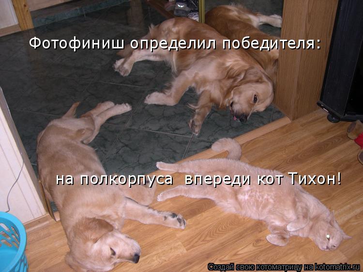 Котоматрица: Фотофиниш определил победителя: на полкорпуса  впереди кот Тихон!