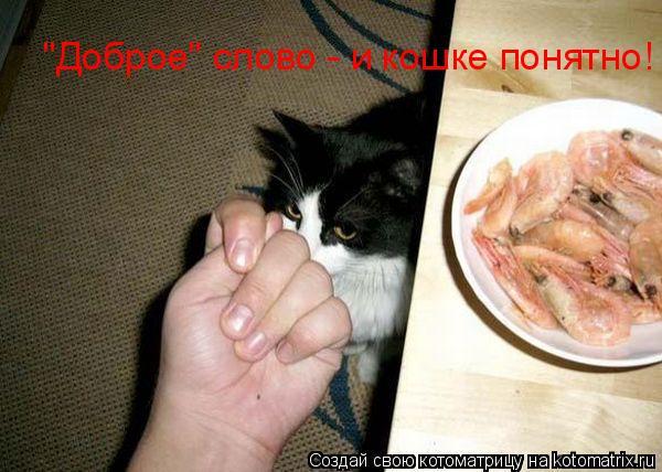 "Котоматрица: ""Доброе"" слово - и кошке понятно!"