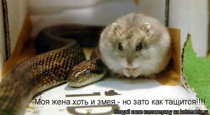 Котоматрица: Моя жена хоть и змея - но зато как тащится!!!!