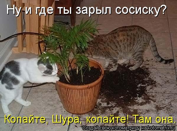 http://kotomatrix.ru/images/lolz/2010/03/04/504468.jpg