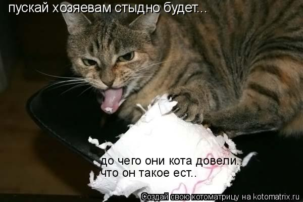 Котоматрица: пускай хозяевам стыдно будет... до чего они кота довели.. что он такое ест..