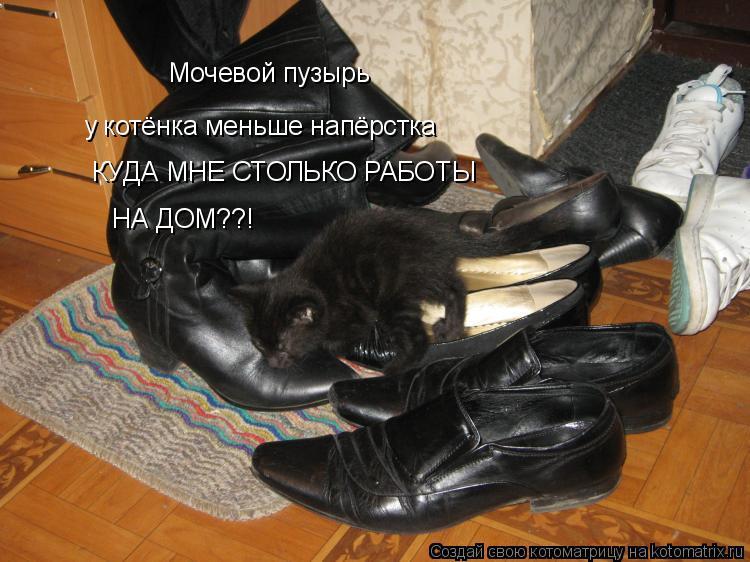 Котоматрица: Мочевой пузырь у котёнка меньше напёрстка КУДА МНЕ СТОЛЬКО РАБОТЫ  НА ДОМ??!