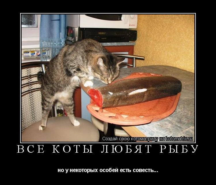 Котоматрица: Все коты любят рыбу но у некоторых особей есть совесть...
