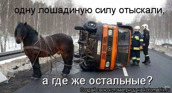 Котоматрица: одну лошадиную силу отыскали, а где же остальные?