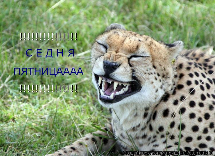 Котоматрица: С Е Д Н Я ПЯТНИЦАААА !!!!!!!!!!!!!!! !!!!!!!!!!!!!!!