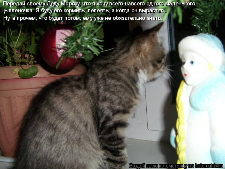 Котоматрица: Передай своему Деду Морозу, что я хочу всего-навсего одного маленького  цыпленочка. Я буду его кормить, лелеять, а когда он вырастет…..   Ну, в