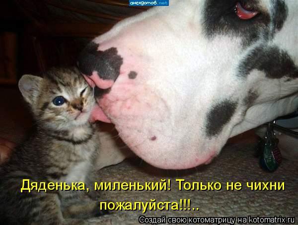 Котоматрица: Дяденька, миленький! Только не чихни  пожалуйста!!!..