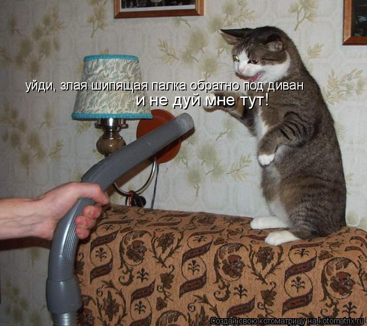 Котоматрица: уйди, злая шипящая палка обратно под диван и не дуй мне тут!