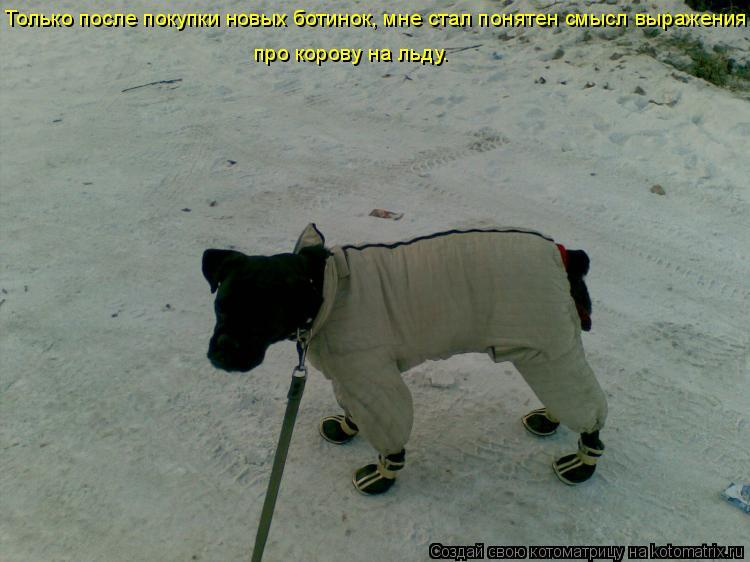 Котоматрица: Только после покупки новых ботинок, мне стал понятен смысл выражения  про корову на льду.
