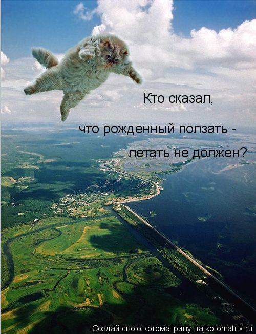 Котоматрица: Кто сказал, что рожденный ползать -  летать не должен?