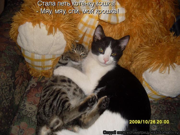 Котоматрица: Стала петь котёнку кошка: - Мяу, мяу, спи, мой крошка!