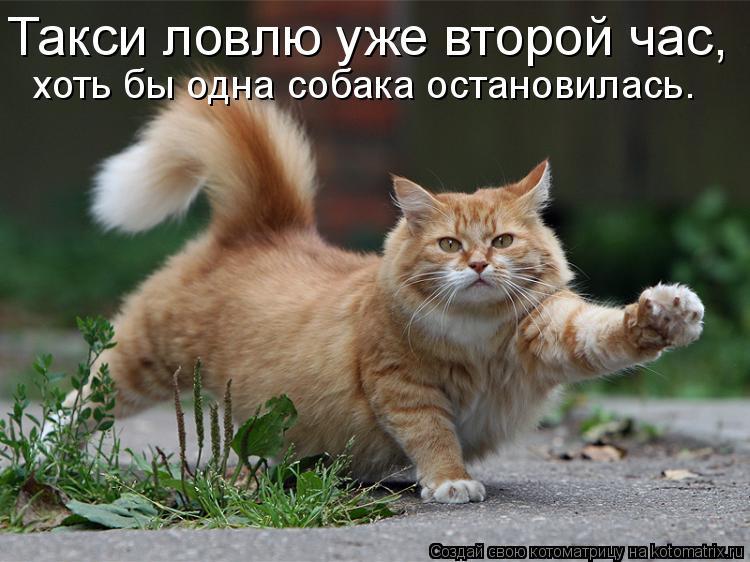 Котоматрица: Такси ловлю уже второй час, хоть бы одна собака остановилась.