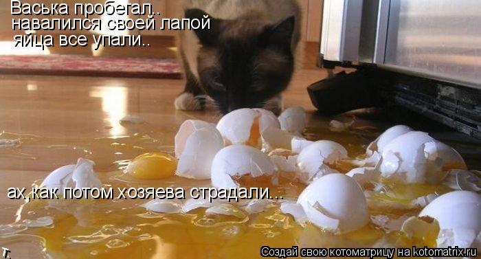 Котоматрица: Васька пробегал.. навалился своей лапой яйца все упали.. ах,как потом хозяева страдали...