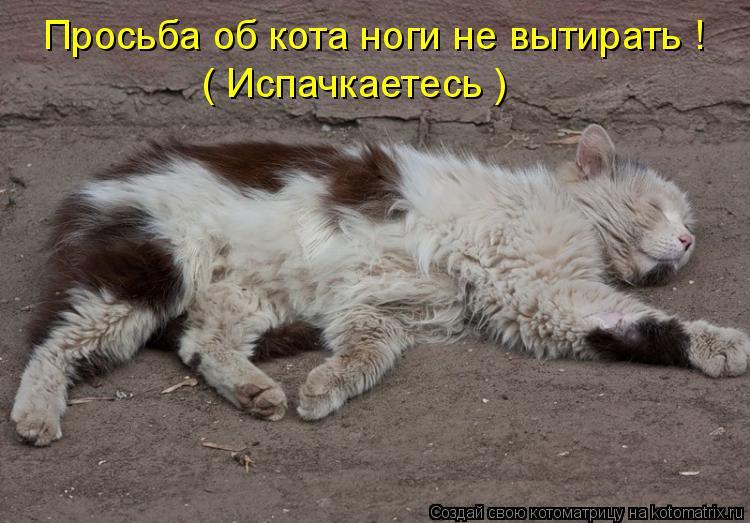 Котоматрица: ( Испачкаетесь ) Просьба об кота ноги не вытирать !