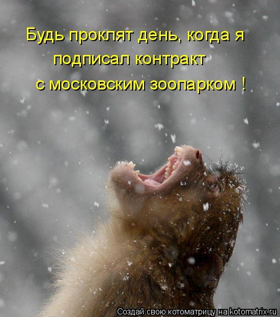 Котоматрица: Будь проклят день, когда я подписал контракт  с московским зоопарком !